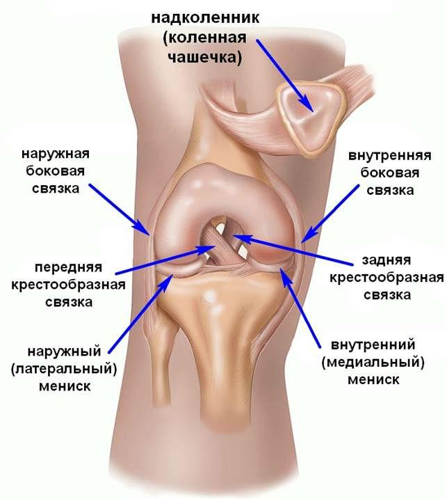 Медицина боль в левом боку со спины