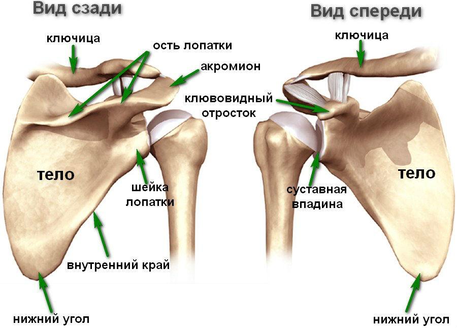 Образ жизни при остеохондрозе шейного отдела