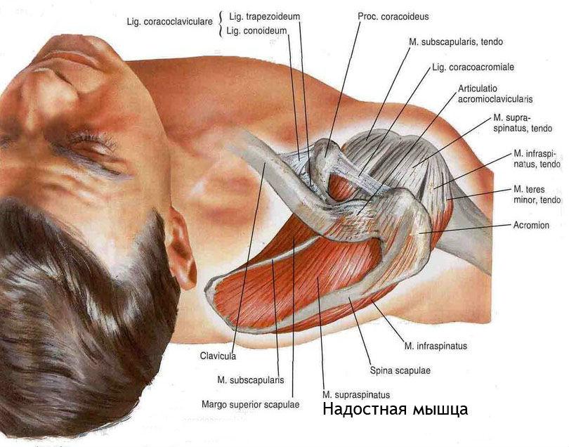 Боль в грудной клетке с правой стороны отдающая в спину