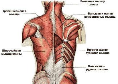 Большие прыщи на плечах спине лечение