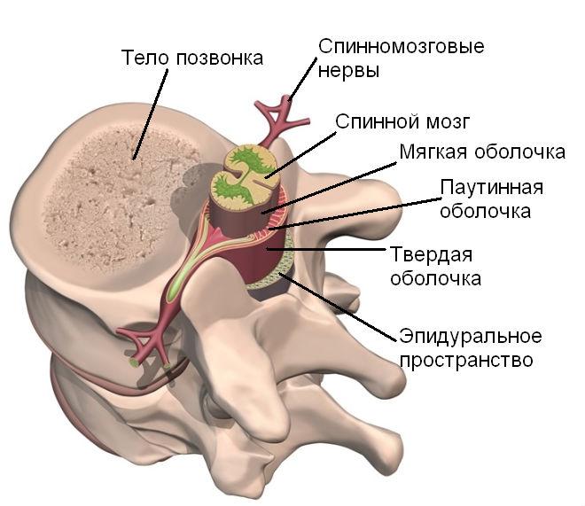 Клиники межпозвонковая грыжа шейного отдела