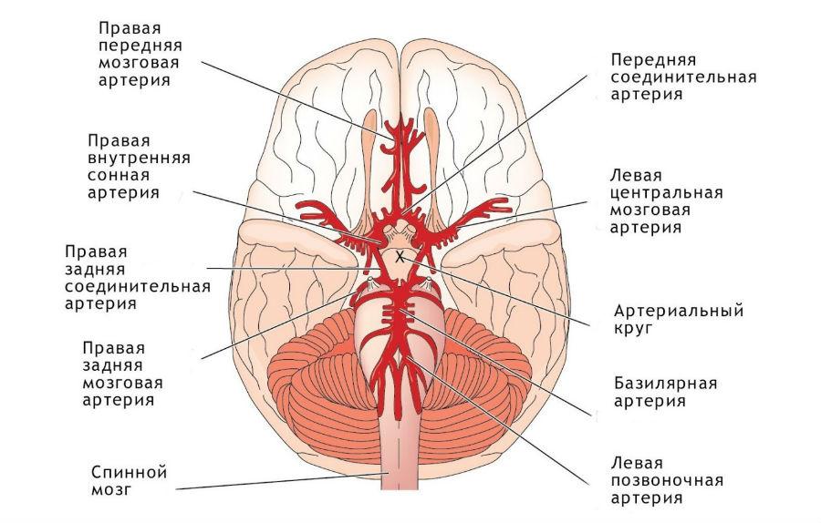 Конус Мозговой