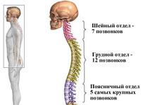 Упражнения для грудного отдела