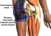 Мышцы хамстринг