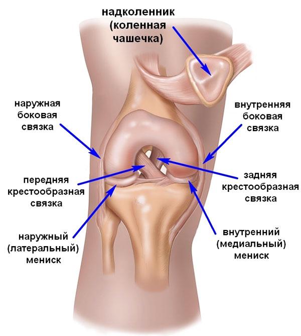 связки колена