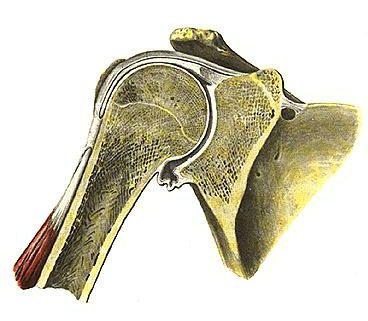 Лечение плечевого сустава в беларуси
