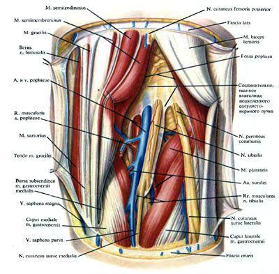 Препараты от варикоза на ногах