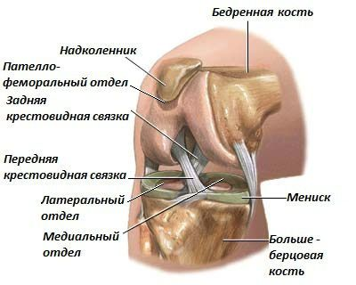 Заболевания коленного сустава симптомы и лечение