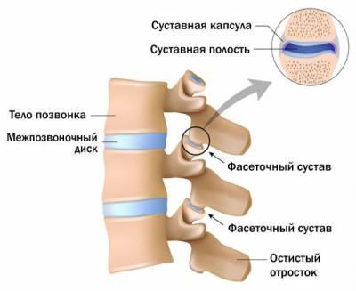 Фасеточные суставы позвоночника
