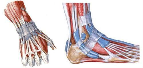 Связки руки и ноги