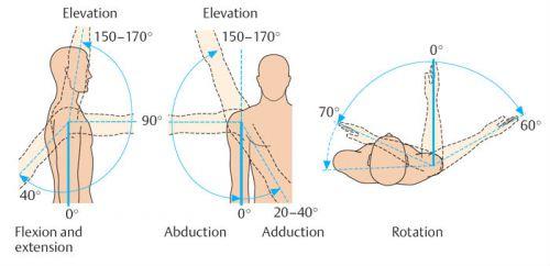 Движения в плечевом суставе