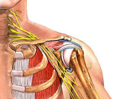 Шейное и плечевое нервное сплетение