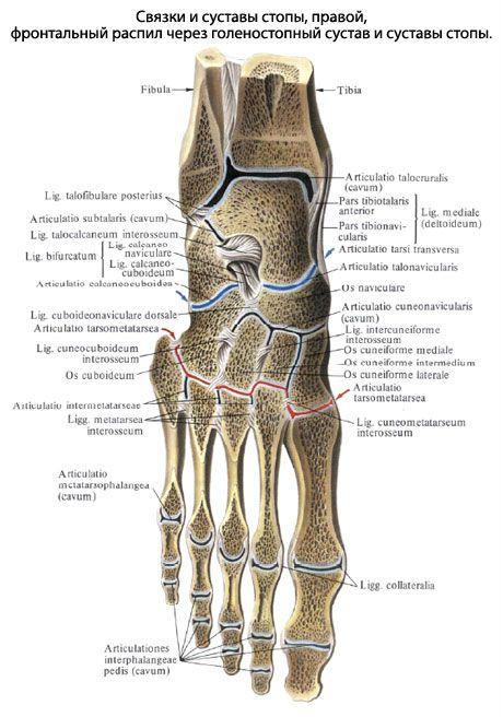 артрозо артрит суставов стопы