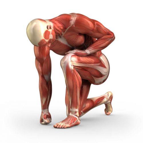 Мышцы человеческого тела