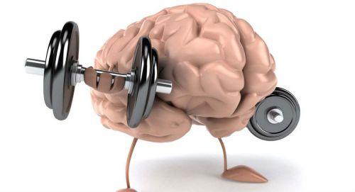 Здоровый головной мозг