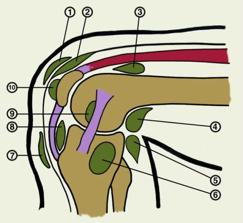 Синовиальные сумки коленного сустава