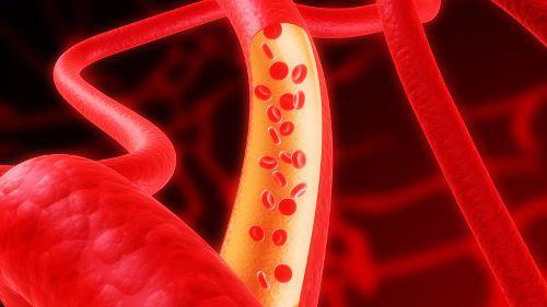 Кровеносный сосуд