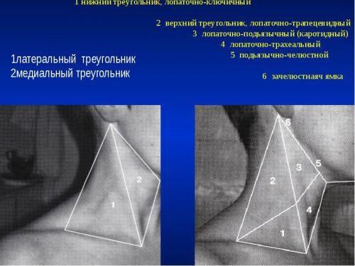 Шейные треугольники