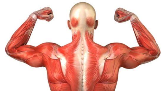 лечение плечевого сустава по бубновскому