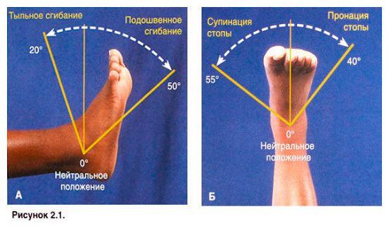 Амплитуда движений в голеностопном суставе