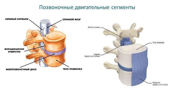 Пояснично-крестцовый остеохондроз рентген признаки