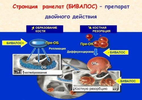 Действие препарата Бивалос